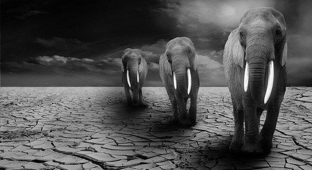 elefantes en foto blanco y negro simbolizando fuerza